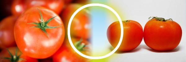 尿酸値を下げる食べ物としてトマトってどうなの?2つの真逆な意見_トマト○
